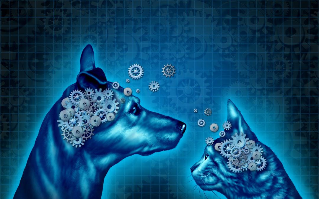 Pourquoi les soins énergétiques ou la communication animale fonctionnent-ils à distance ?