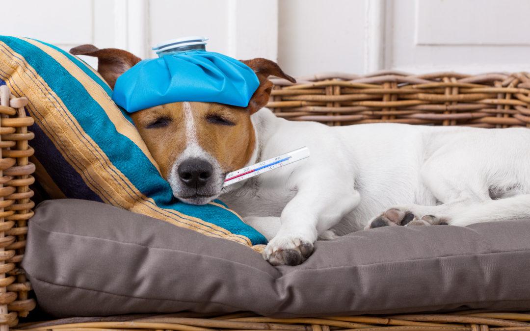 Mon animal est malade? J'appelle le vétérinaire!!