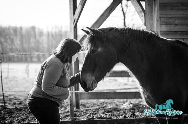 Ce que me disent les chevaux…