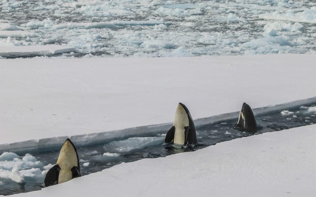 Communication avec une orque en captivité – Partie 2