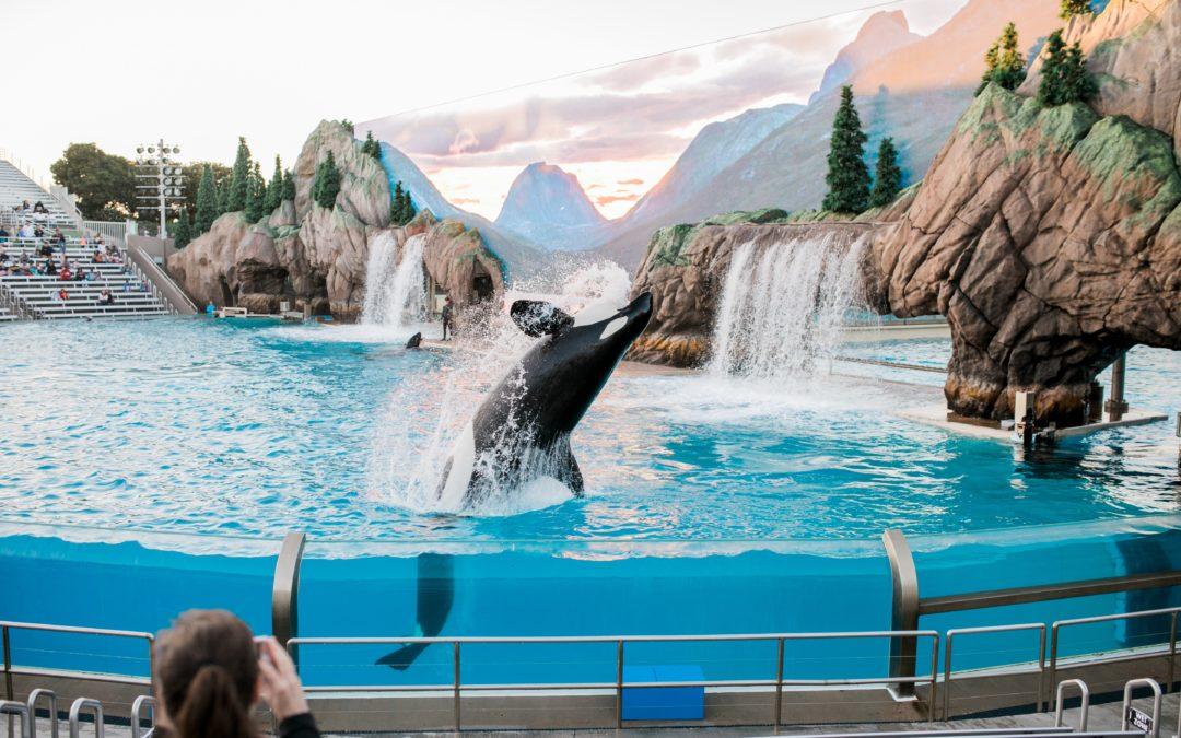 Communication avec une orque en captivité Partie 1